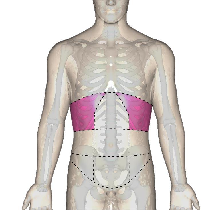 解剖学的な下肋部の位置と腹部の区分