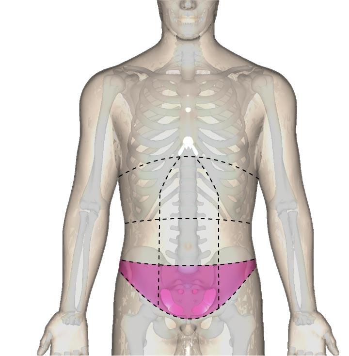 一般的な使い方の下腹部