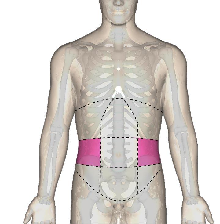 側副部の位置と腹部の区分