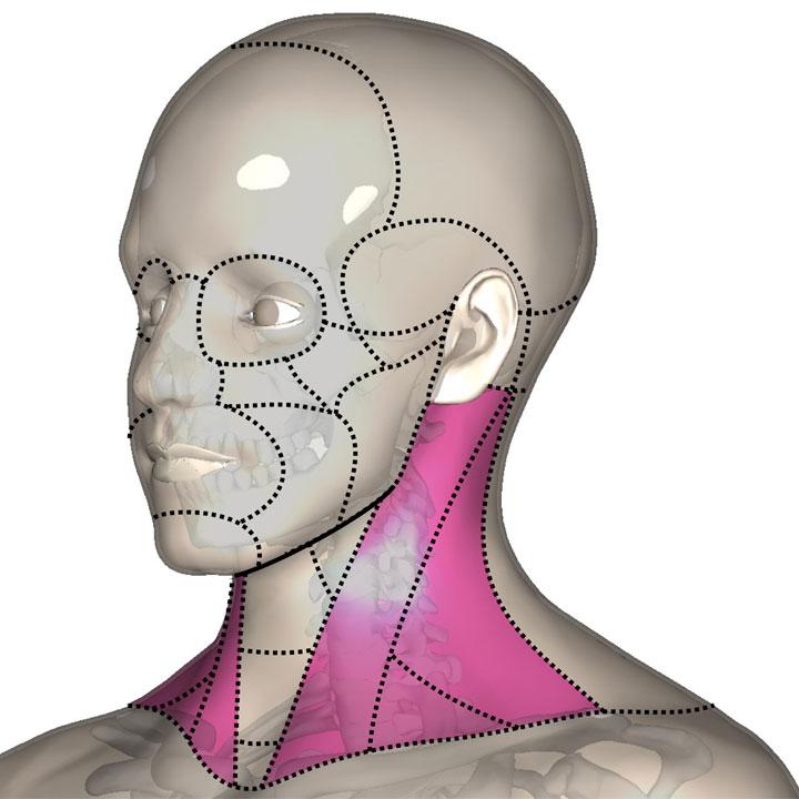 広い意味の側頚部