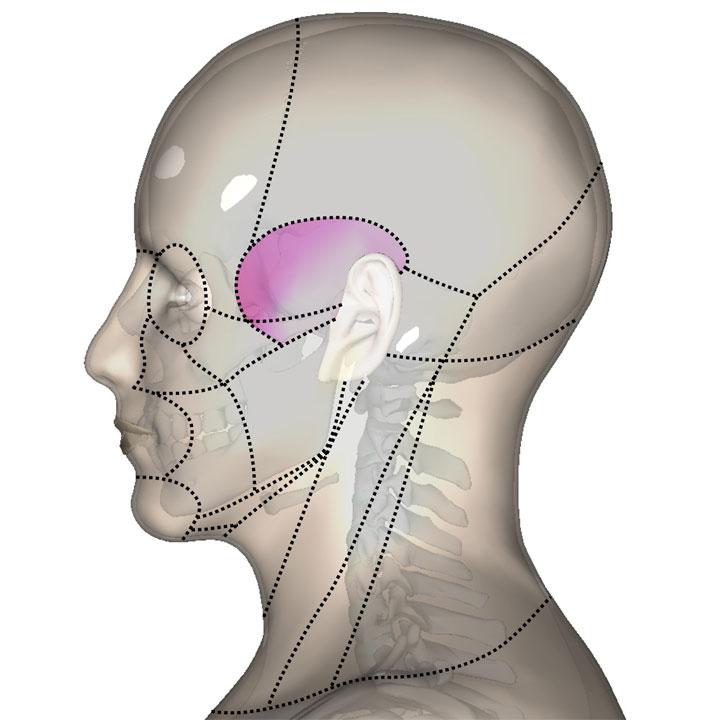 側頭部(狭い意味)