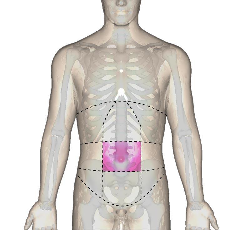 臍部の位置と腹部の区分