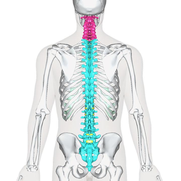 頚椎の位置
