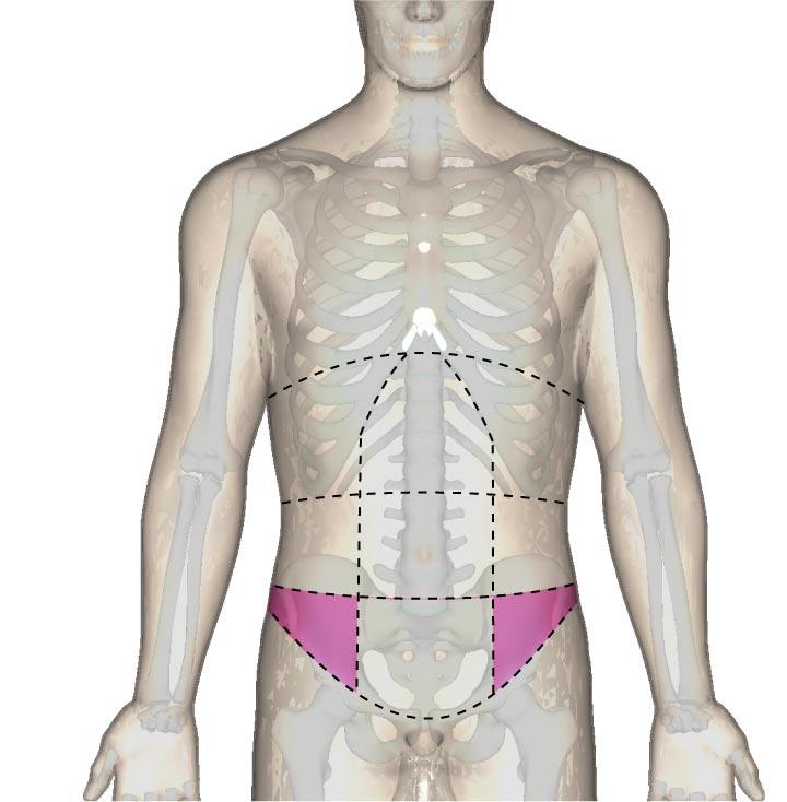 腹部の区分と鼠径部の位置